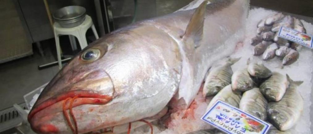 """Ψάρι """"γίγας"""" 53,8 κιλών στα δίχτυα ψαράδων (εικόνες)"""