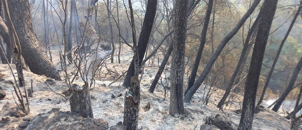 Φωτιές: άμεσες παρεμβάσεις στις πυρόπληκτες περιοχές