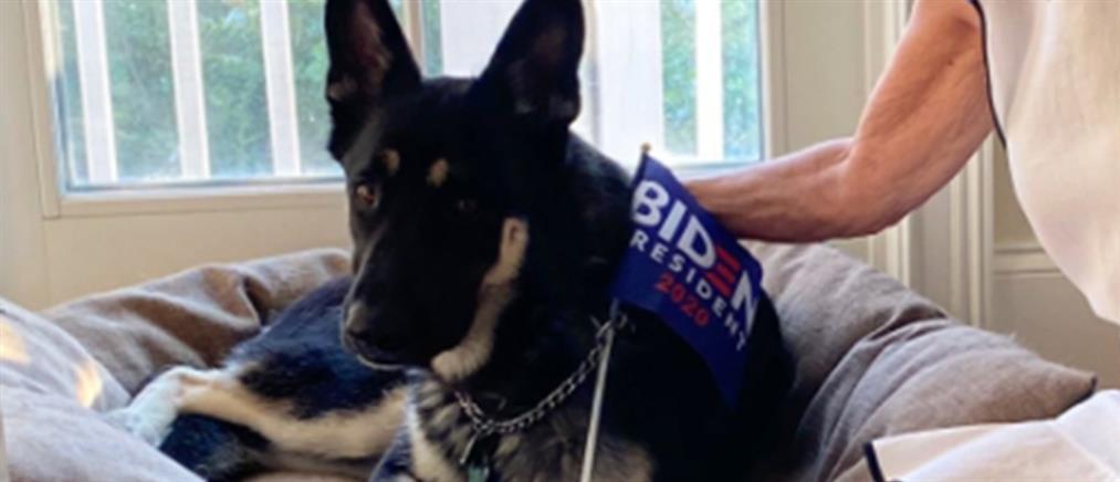 Σκυλί του Μπάιντεν δάγκωσε φρουρό στον Λευκό Οίκο