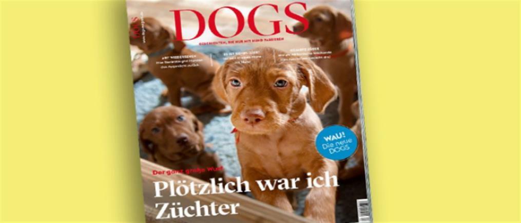 Αδέσποτος σκύλος που βρήκε προστασία στο Νιοχώρι έγινε διάσημος στη Γερμανία!