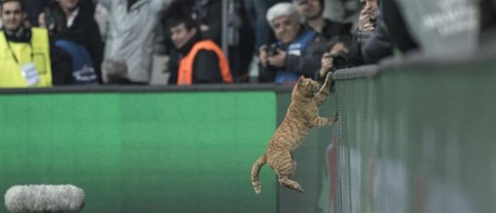 """""""Έγδαρε"""" την Μπεσίκτας η UEFA για μία …γάτα! (εικόνες)"""