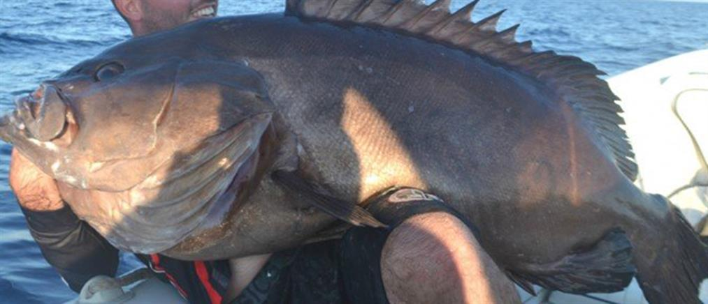"""Ψαράς έπιασε """"βλάχο"""" 47 κιλών (εικόνες)"""