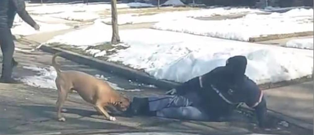 Άγρια επίθεση πιτ μπουλ σε ταχυδρόμο! (βίντεο)