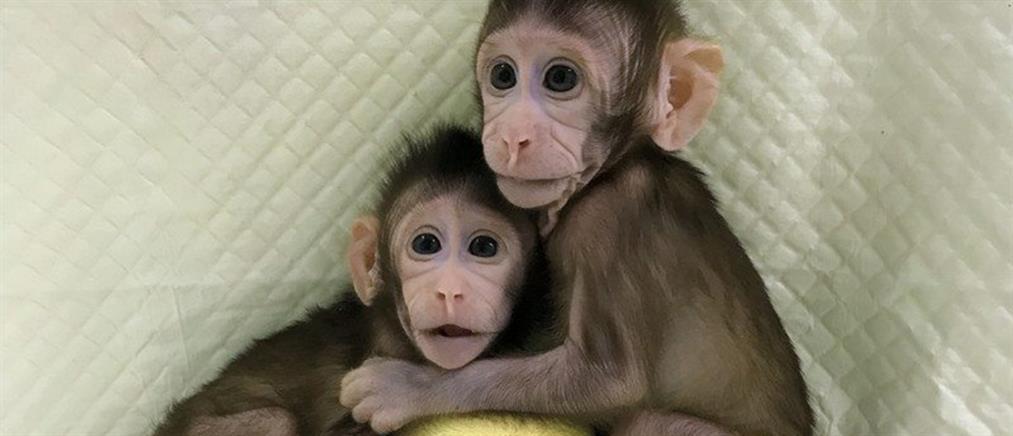 Η πρώτη κλωνοποίηση μαϊμούδων είναι γεγονός (βίντεο)