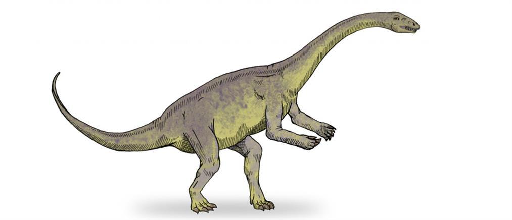 Εντυπωσιακή ανακάλυψη: βρέθηκε κολλαγόνο ηλικίας 195 εκατομμυρίων ετών