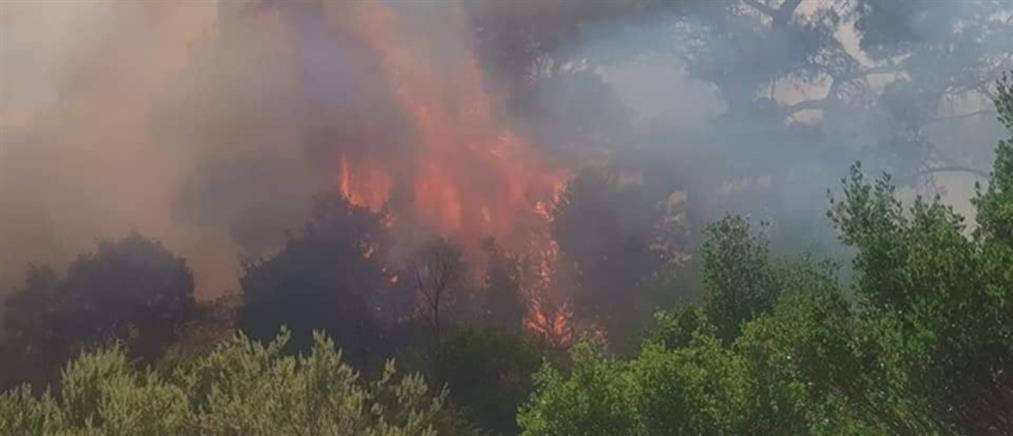 Έβρος: Ολονύκτια μάχη με τις φλόγες