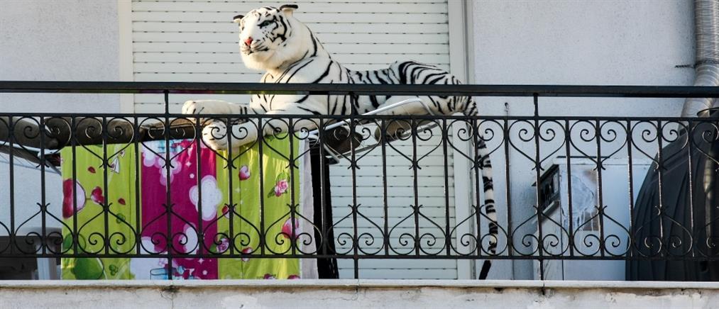 Τραγωδία: έπεσε από το μπαλκόνι μαζεύοντας ρούχα από την απλώστρα!