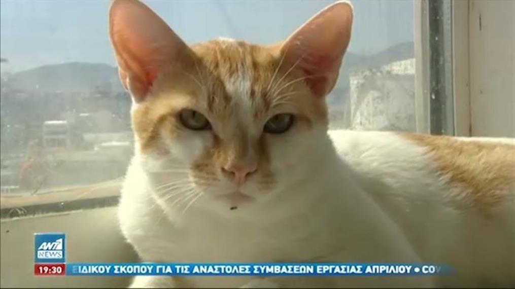Ζώα συντροφιάς: Σε δημόσια διαβούλευση το νομοσχέδιο