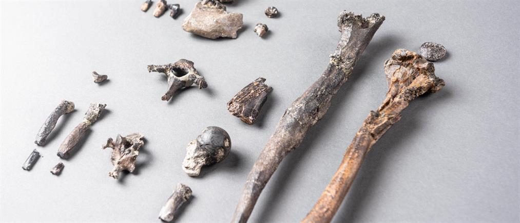 Απολίθωμα 11,62 εκατομμυρίων ετών ανατρέπει τα δεδομένα για την ανθρώπινη εξέλιξη