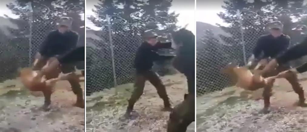 Καταδικάστηκαν οι νεαροί που πέταξαν σκύλο σε γκρεμό όταν ήταν φαντάροι (βίντεο)