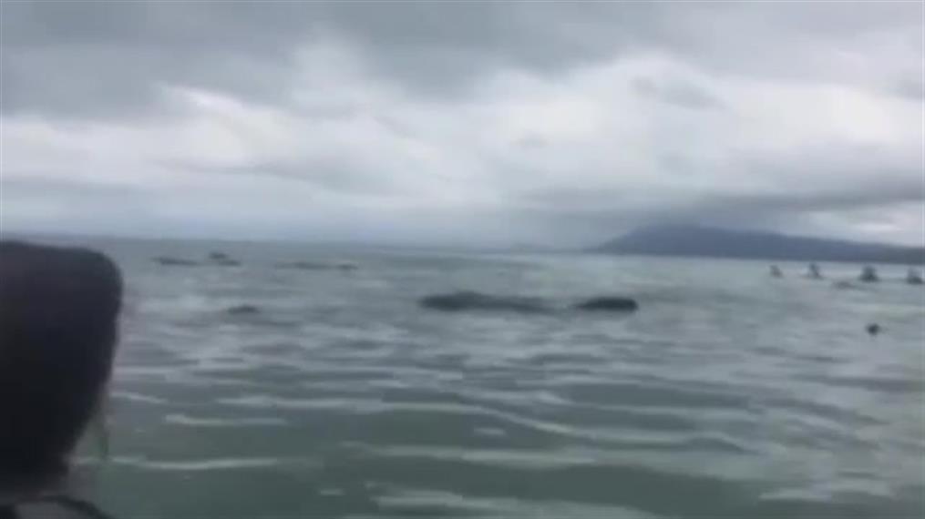 Επιχείρηση για τη διάσωση φαλαινών στη Νέα Ζηλανδία