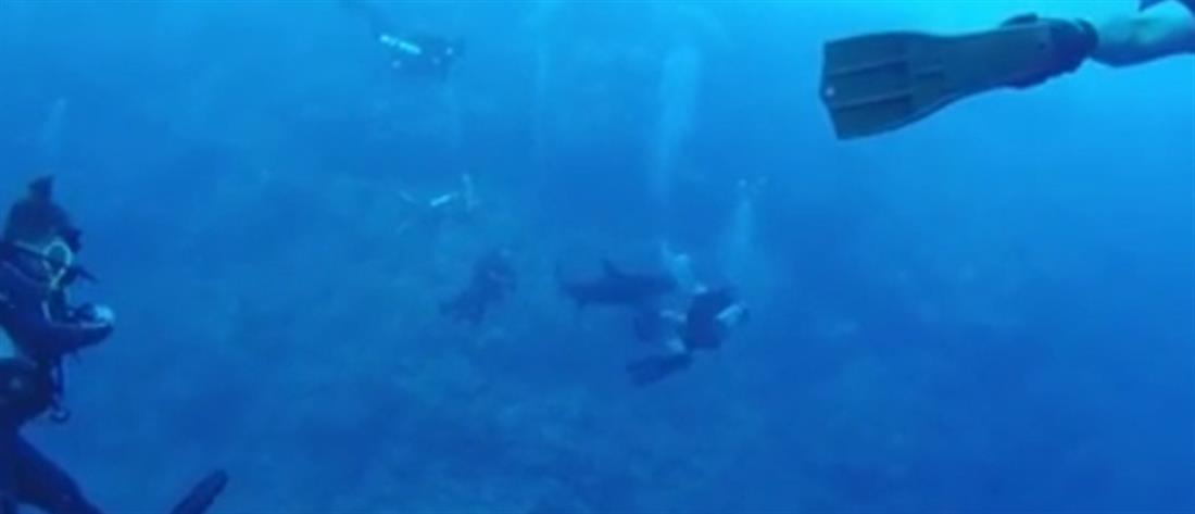 Βίντεο: καρχαρίας επιτίθεται σε δύτη