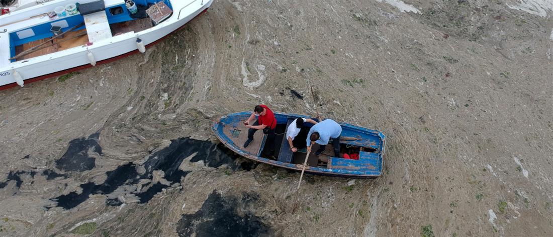 Θάλασσα Μαρμαρά: η βλέννα κάλυψε τα πάντα (εικόνες)