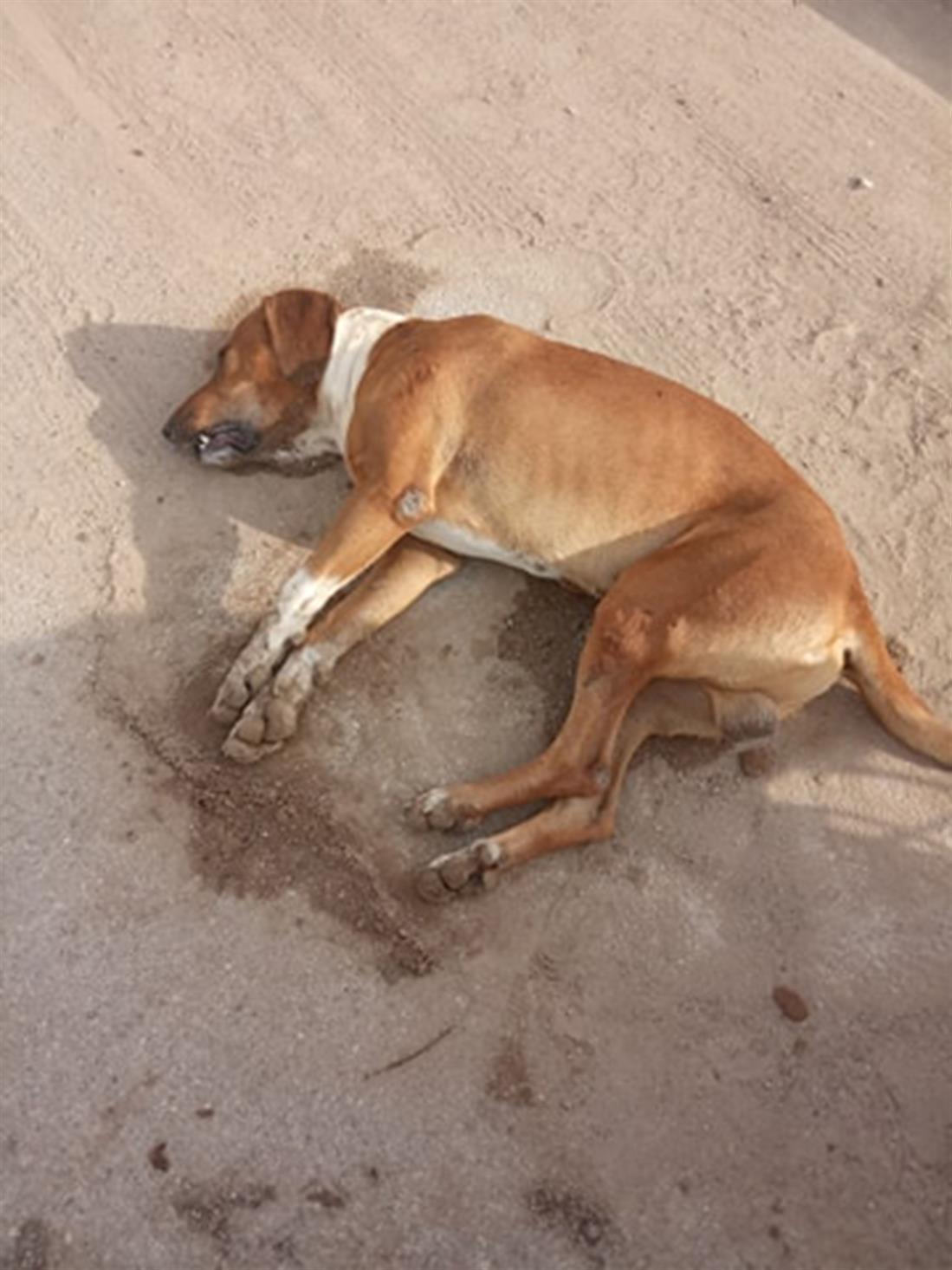 Κοιλάδα Αργολίδας - φόλες - σκυλιά