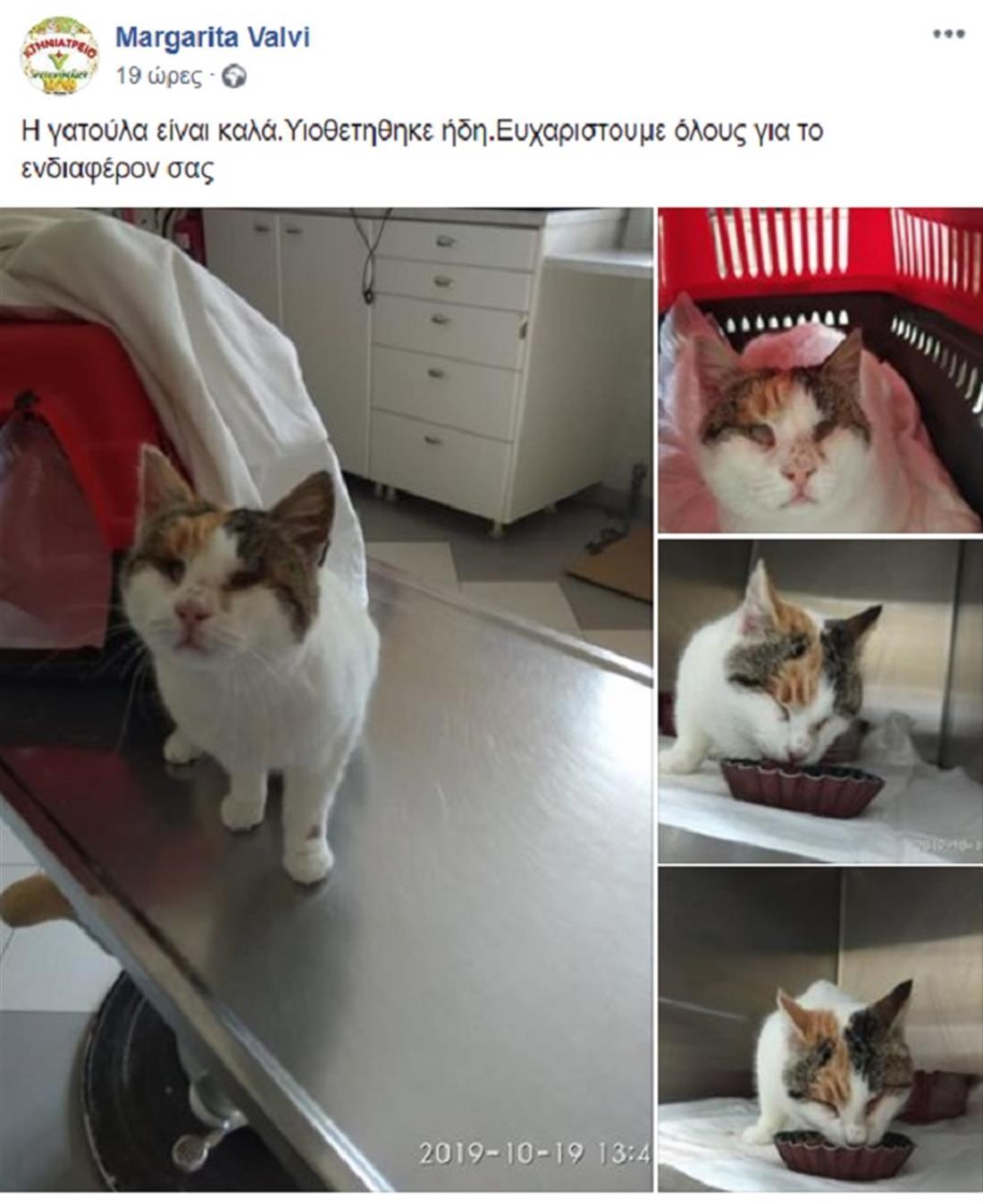 Γάτα - Κακοποίηση - Φολέγανδρος - Σαντορίνη
