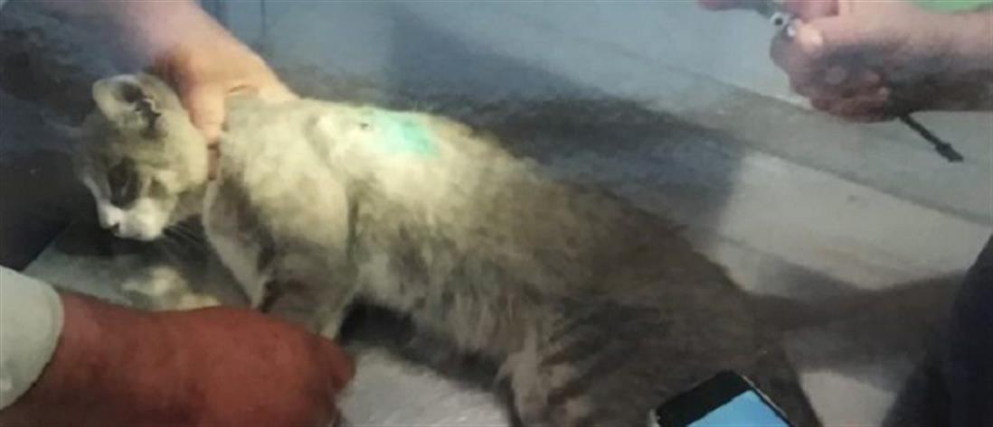 Λυκειάρχης πυροβόλησε εν ψυχρώ γάτο και τον άφησε παράλυτο (εικόνες)