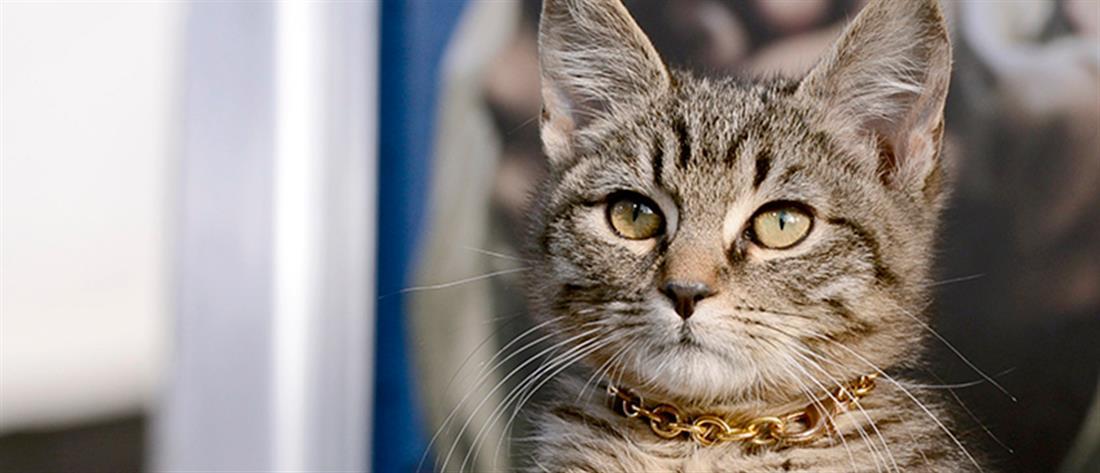 Απίστευτο: Τον δάγκωσε γάτα και πέθανε από λύσσα!