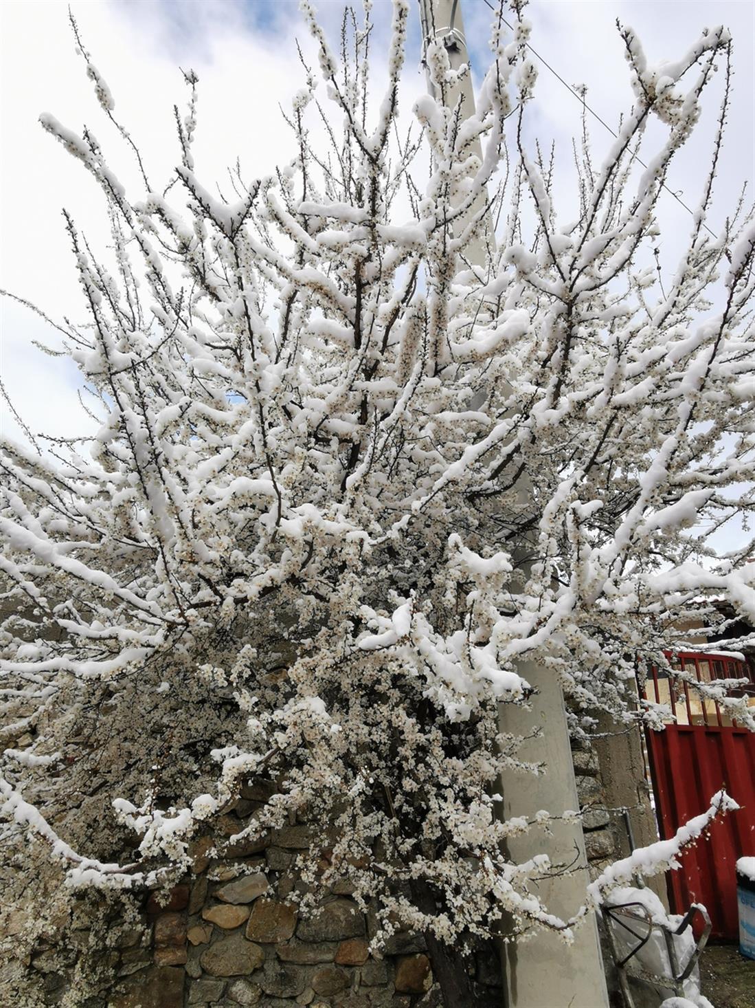 χιόνι - Καρυδοχώρι Σερρών