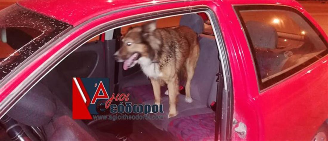 Εισβολή αδέσποτου σκύλου μέσα σε αυτοκίνητο (βίντεο)