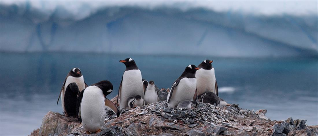 Ανταρκτική: συναυλία για πιγκουίνους και φώκιες!
