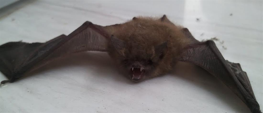 Κορονοϊός: παρά την επιδημία, το κρέας νυχτερίδας παραμένει δημοφιλές!