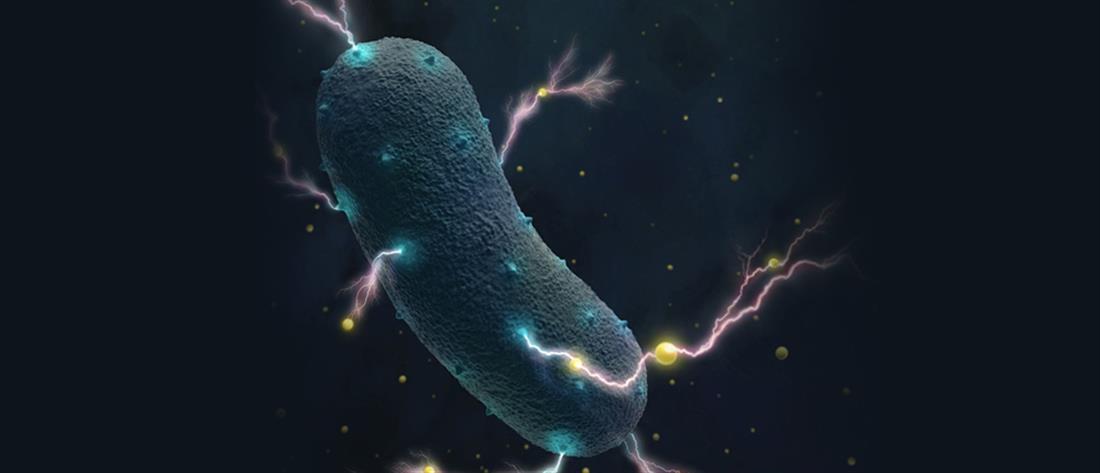 Βακτήρια του εντέρου παράγουν ηλεκτρικό ρεύμα!