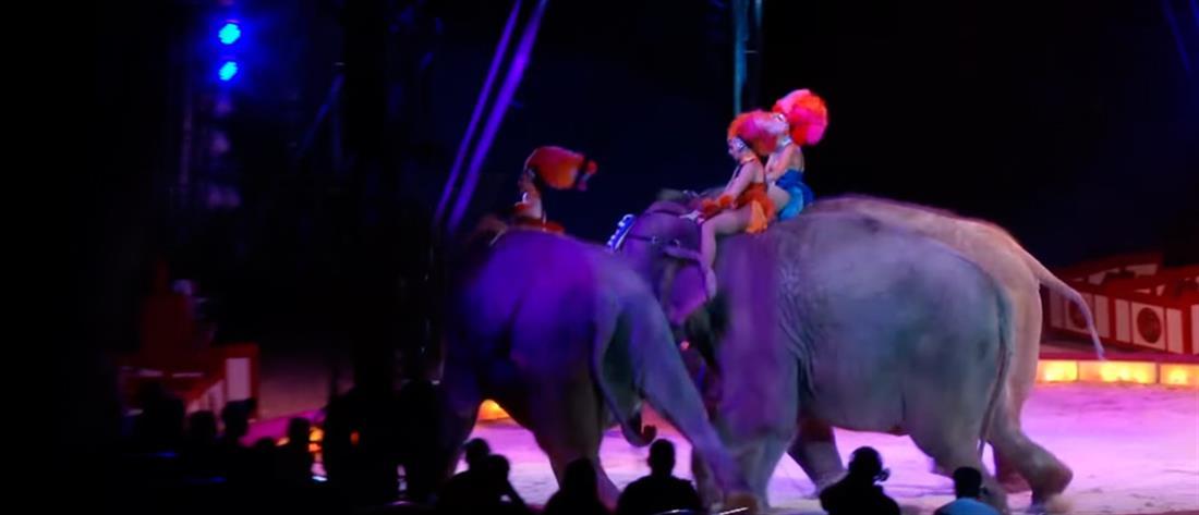 Πανικός σε τσίρκο: ελέφαντας έπεσε πάνω σε θεατές (βίντεο)