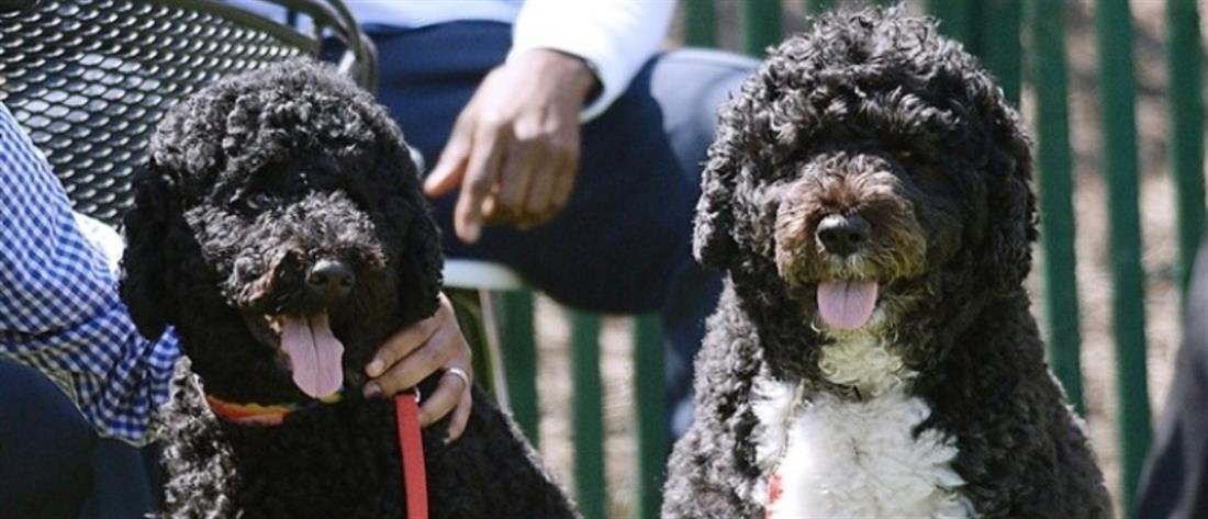 Ζώα συντροφιάς και αδέσποτα: Τι προβλέπει το νομοσχέδιο