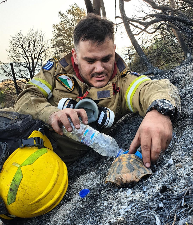 Φωτιά - Αχαΐα - πυροσβέστης - χελώνα