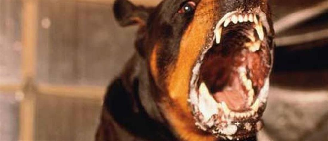 Νεογέννητο κατασπαράχθηκε από σκυλιά μέσα σε νοσοκομείο