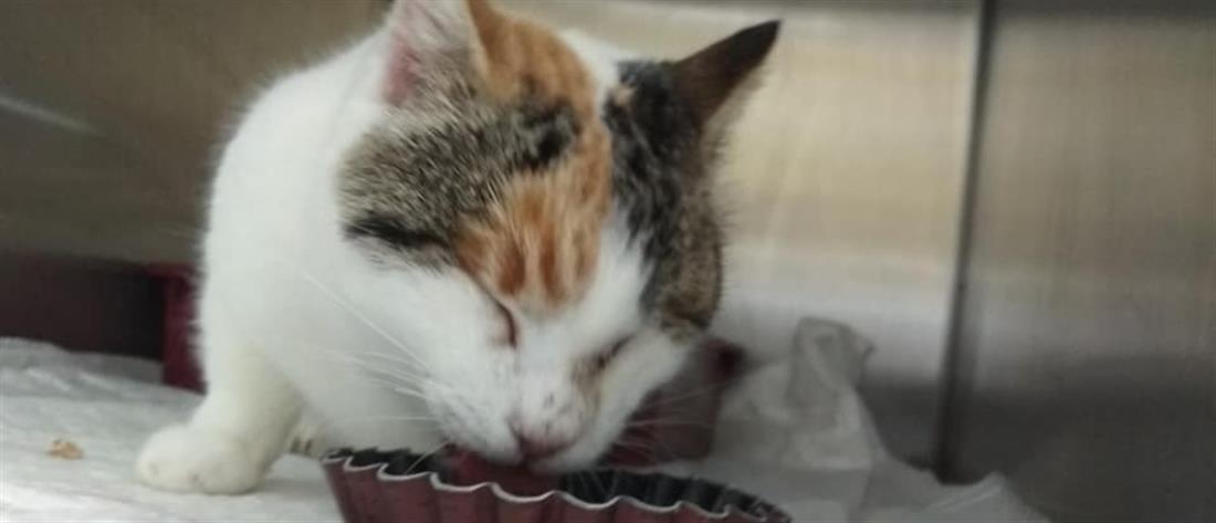 Υιοθετήθηκε το τυφλό γατάκι που κακοποιήσαν μαθητές στη Φολέγανδρο (εικόνες)