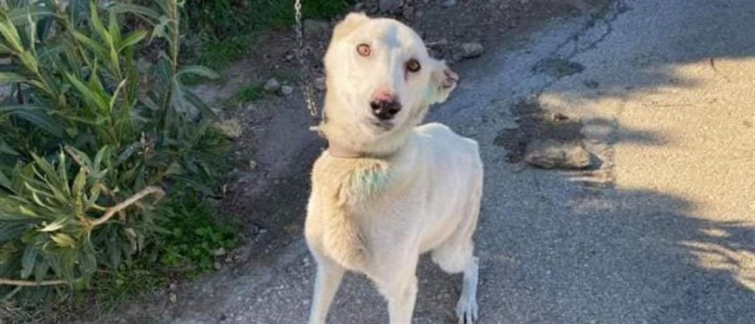 Σοκ: Έκοψε τα αυτιά των σκύλων του
