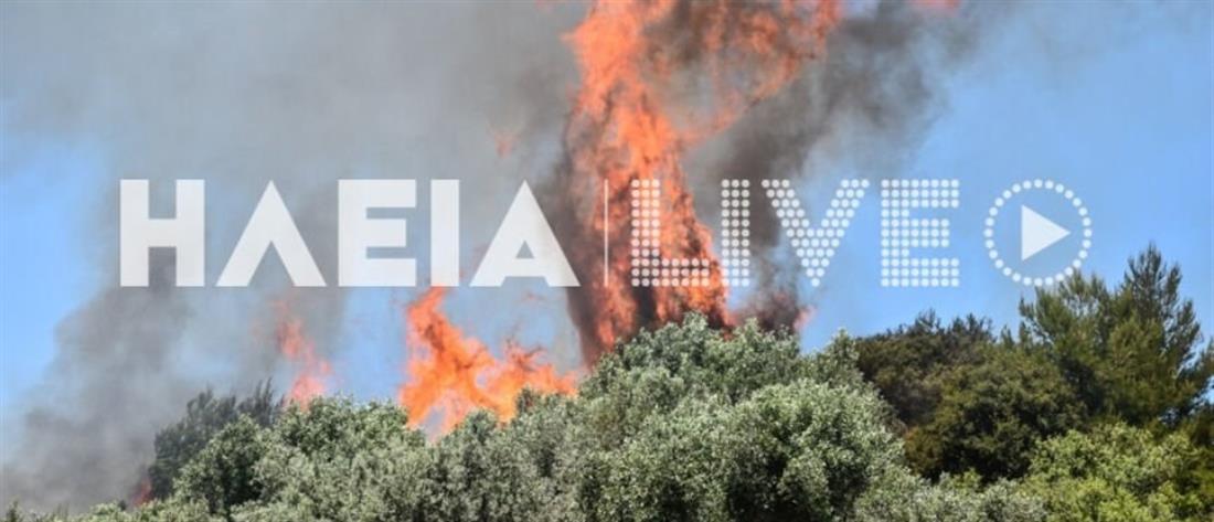 Πύργος: Φωτιά σε δάσος (εικόνες)