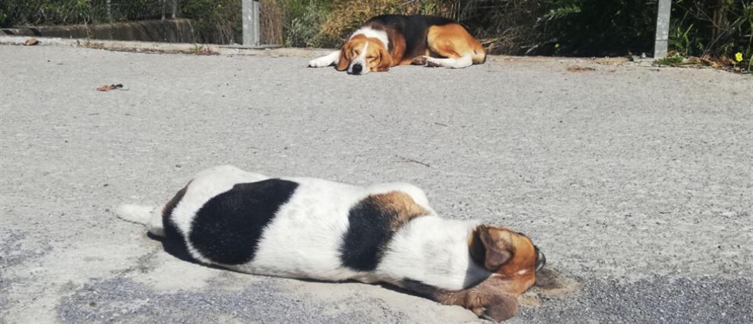 """Σκύλος θρηνεί """"φίλο"""" του που πέθανε από φόλα (εικόνα)"""