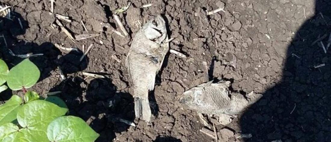 Βρήκαν ψάρια στα χωράφια τους! (εικόνες)