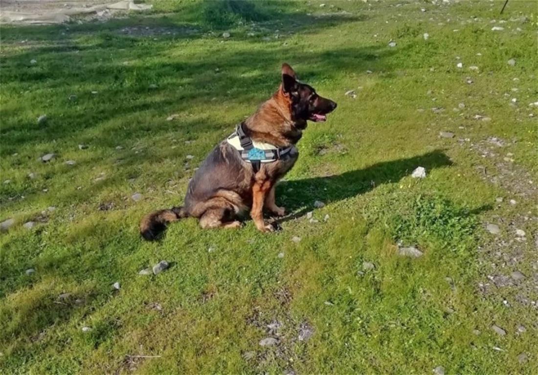 Φόλες - σκυλιά - Κρήτη