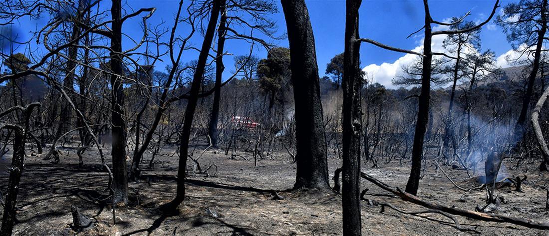 Φωτιά στα Γεράνεια Όρη: ποιοι δρόμοι είναι κλειστοί
