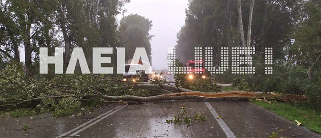 Κακοκαιρία: Έκλεισε η Εθνική Οδός από πτώση δέντρων (εικόνες)