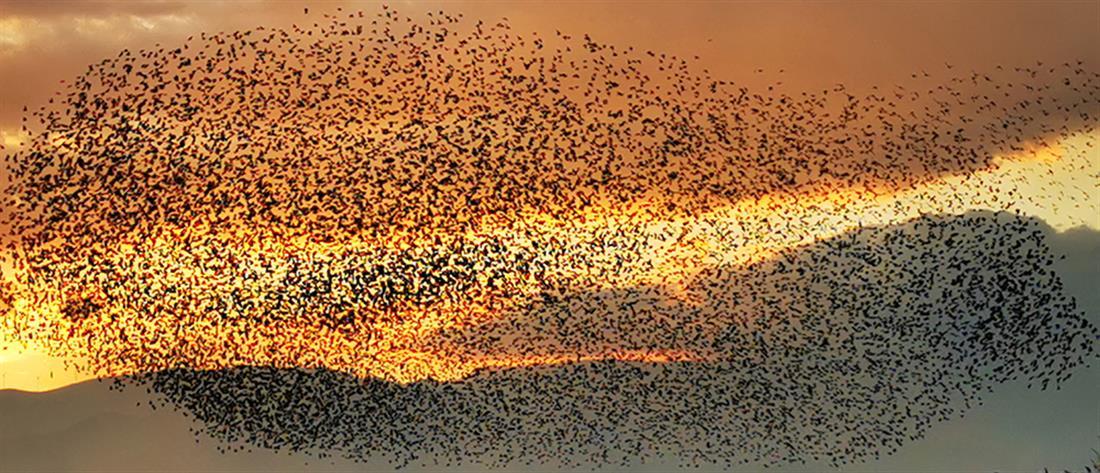 Ναύπλιο: Χιλιάδες ψαρόνια στον ουρανό (εικόνες)