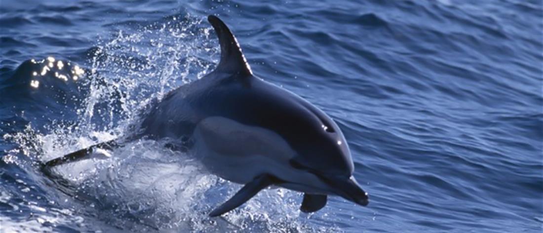 Νεκρό δελφίνι στη Μαρίνα Ζέας