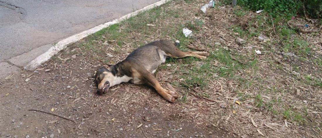 Τραυμάτισε θανάσιμα με φτυάρι το σκυλί της γειτόνισσάς του