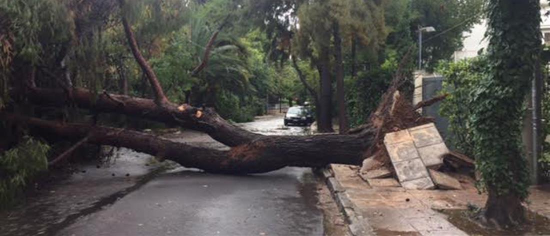 Τραγωδία στην Πέλλα: Δέντρο καταπλάκωσε 66χρονο