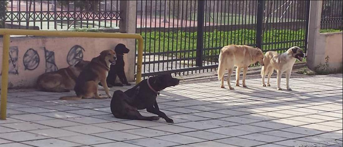 Φρίκη: Πυροβόλησαν σκύλο