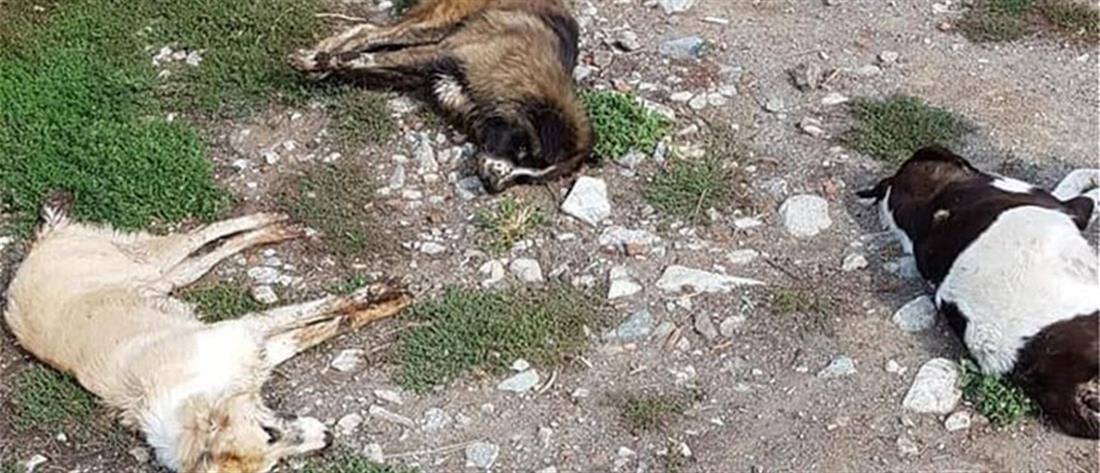 Εξόντωσαν με φόλες δεκάδες σκυλιά στην Φλώρινα (εικόνες)