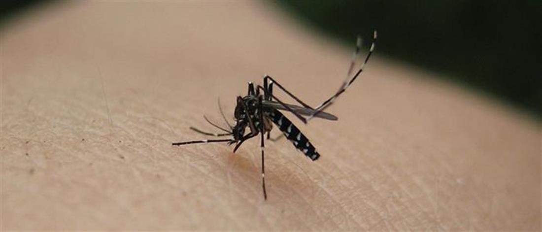 Έξι θάνατοι σε μία εβδομάδα από τον ιό του Δυτικού Νείλου