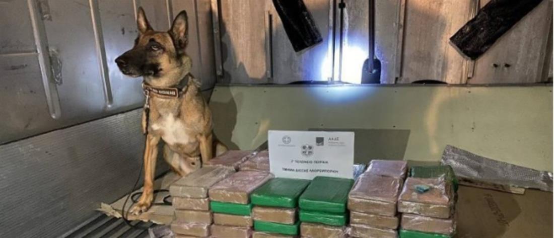 """Το φορτίο με τις μπανάνες """"έκρυβε""""… 70 κιλά κοκαΐνης (εικόνες)"""