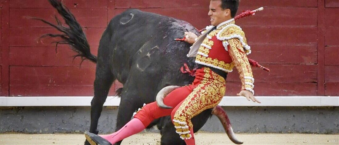 Ταύρος καρφώνει με τα κέρατα του ταυρομάχο! (εικόνες)