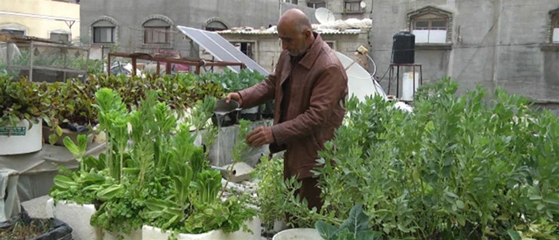 Γάζα: Οι κήποι στις ταράτσες κερδίζουν έδαφος (βίντεο)