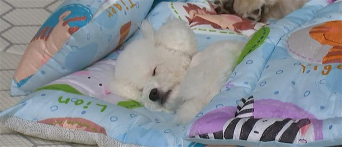 """Πάταγο κάνουν οι """"παιδικοί σταθμοί"""" σκύλων (βίντεο)"""