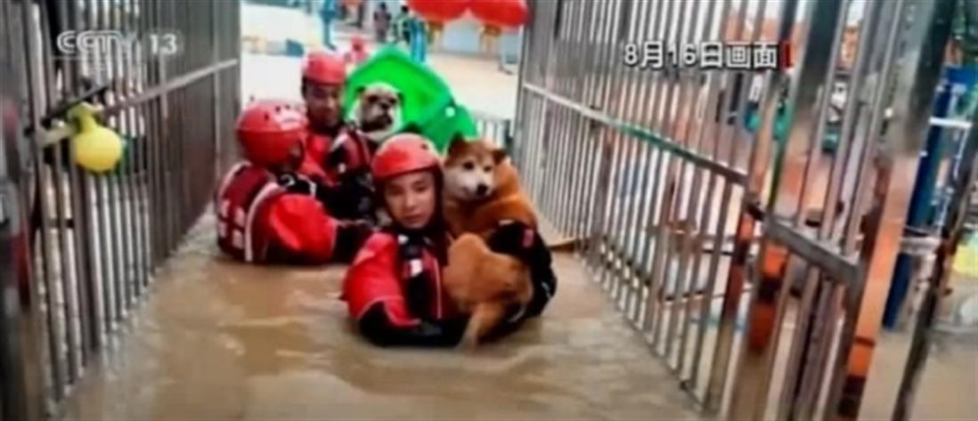 Διάσωση σκυλιών από πλημμυρισμένη κλινική (βίντεο)